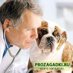 Загадки про ветеринара