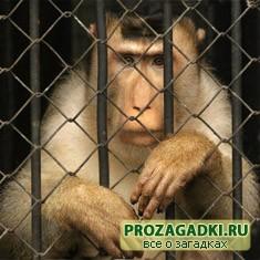 Головоломка про узника