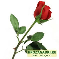 Мудрец и цветок