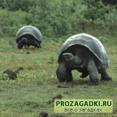 Про черепах