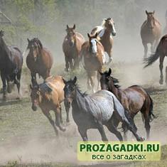Полтабуна и пол-лошади